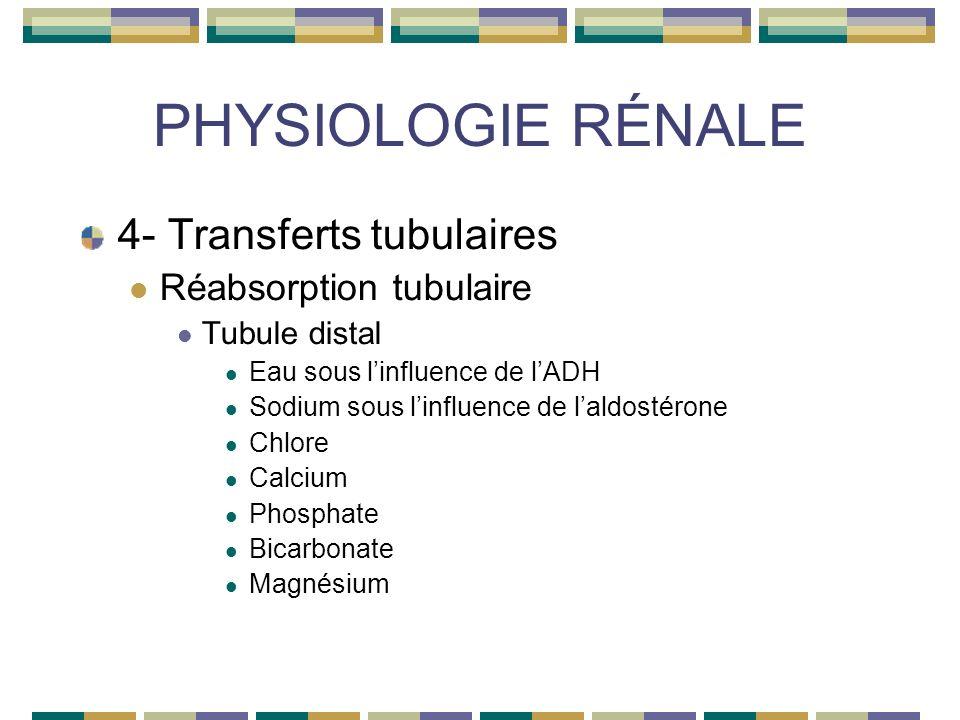 PHYSIOLOGIE RÉNALE 4- Transferts tubulaires Réabsorption tubulaire Tubule distal Eau sous linfluence de lADH Sodium sous linfluence de laldostérone Chlore Calcium Phosphate Bicarbonate Magnésium