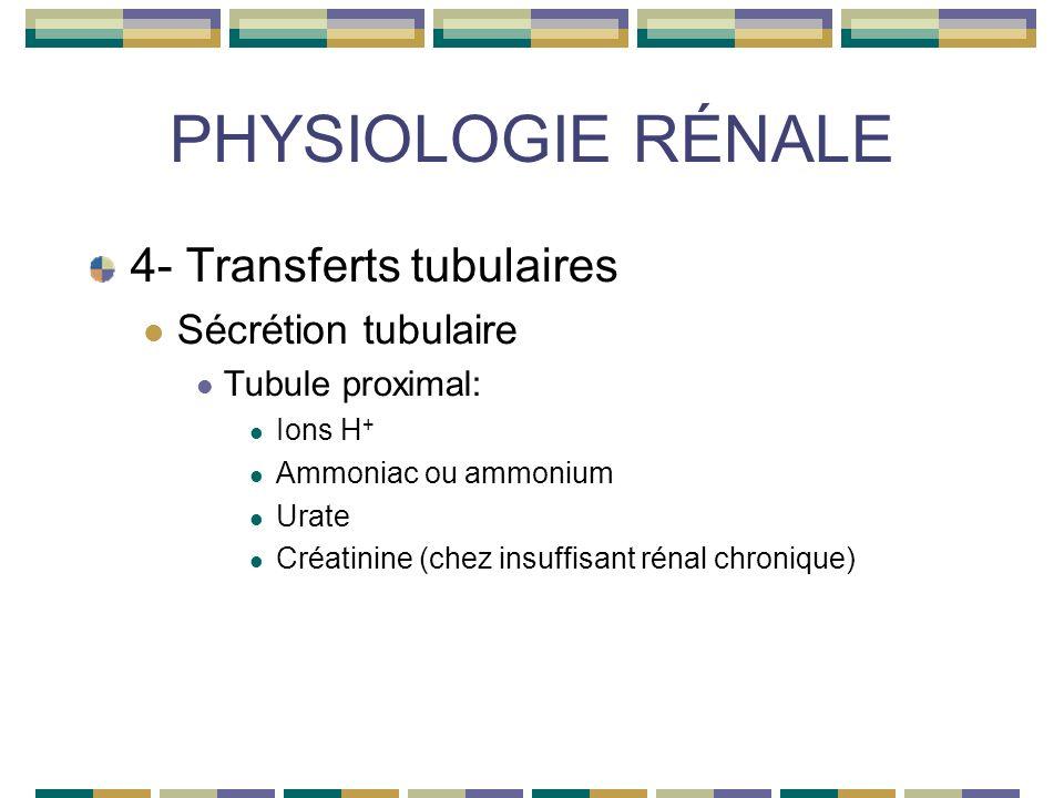 PHYSIOLOGIE RÉNALE 4- Transferts tubulaires Sécrétion tubulaire Tubule proximal: Ions H + Ammoniac ou ammonium Urate Créatinine (chez insuffisant rénal chronique)