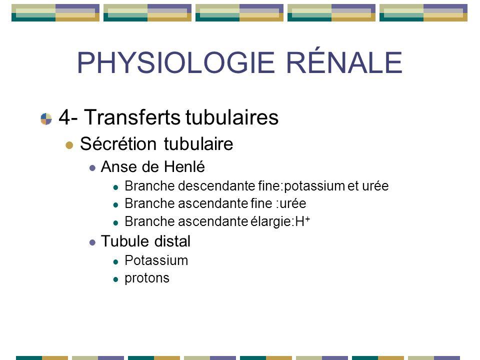 PHYSIOLOGIE RÉNALE 4- Transferts tubulaires Sécrétion tubulaire Anse de Henlé Branche descendante fine:potassium et urée Branche ascendante fine :urée Branche ascendante élargie:H + Tubule distal Potassium protons
