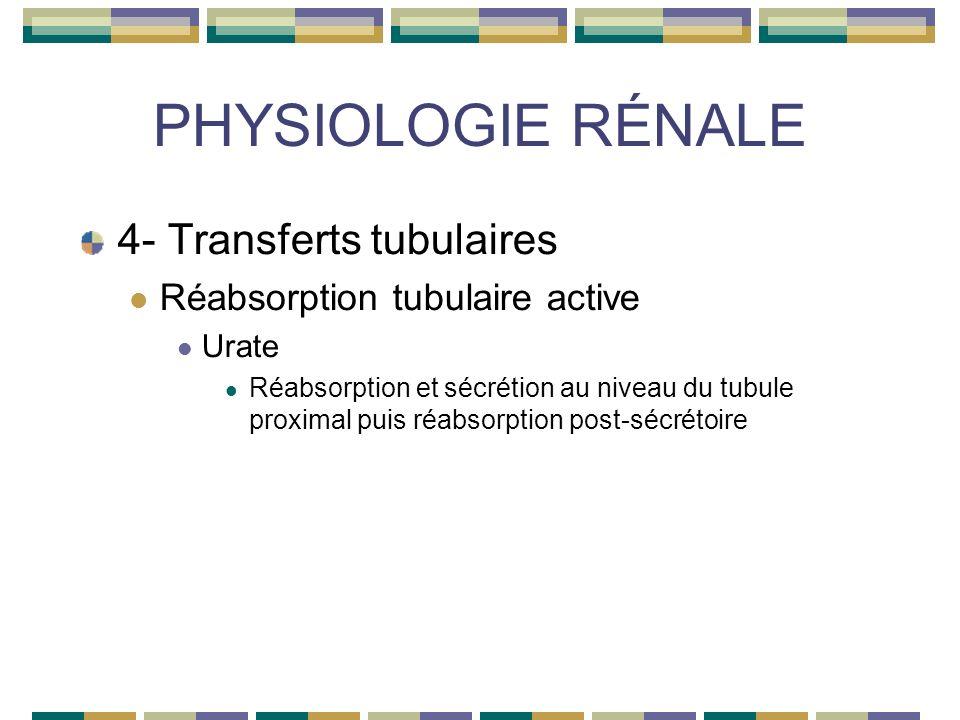 PHYSIOLOGIE RÉNALE 4- Transferts tubulaires Réabsorption tubulaire active Urate Réabsorption et sécrétion au niveau du tubule proximal puis réabsorption post-sécrétoire