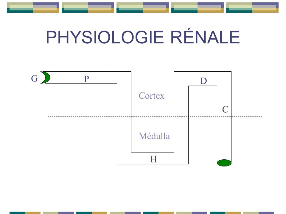 PHYSIOLOGIE RÉNALE 4- Transferts tubulaires Réabsorption tubulaire active Urate 100% 50% 40% 10% Lactates Cétones diurétiques --