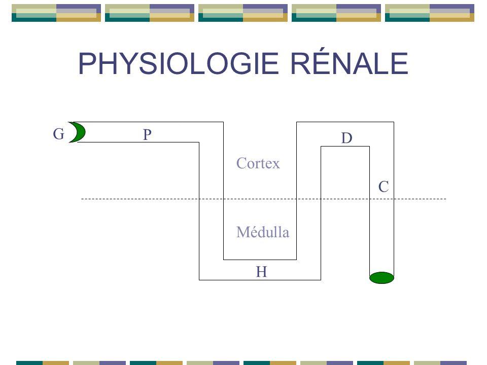 PHYSIOLOGIE RÉNALE G Cortex Médulla P D C H