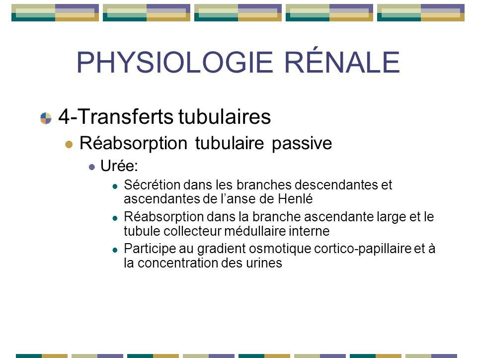 PHYSIOLOGIE RÉNALE 4-Transferts tubulaires Réabsorption tubulaire passive Urée: Sécrétion dans les branches descendantes et ascendantes de lanse de Henlé Réabsorption dans la branche ascendante large et le tubule collecteur médullaire interne Participe au gradient osmotique cortico-papillaire et à la concentration des urines