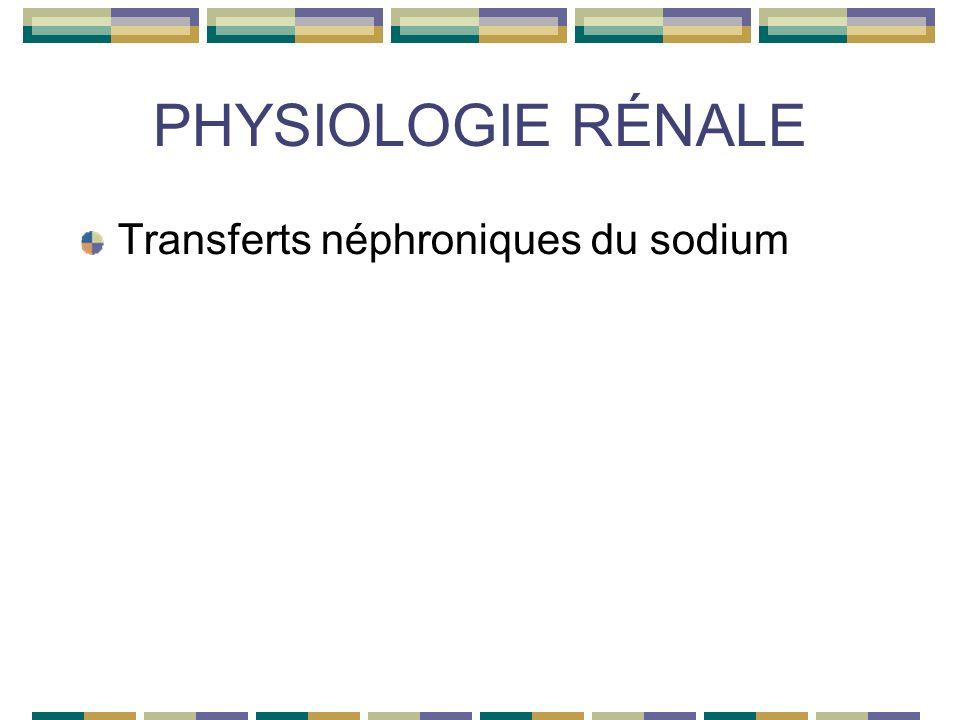 PHYSIOLOGIE RÉNALE Transferts néphroniques du sodium
