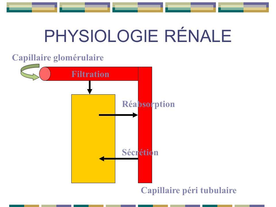 PHYSIOLOGIE RÉNALE 4- Transferts tubulaires Sécrétion tubulaire Lumière tubulaire Cellule rénalePéritubulaire