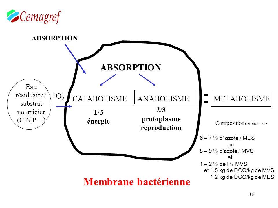 36 ABSORPTION CATABOLISMEANABOLISME 1/3 énergie 2/3 protoplasme reproduction Membrane bactérienne ADSORPTION METABOLISME Eau résiduaire : substrat nou