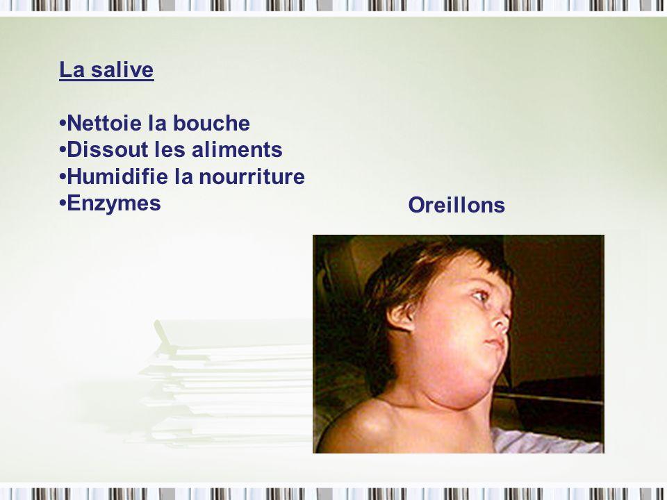 La salive Nettoie la bouche Dissout les aliments Humidifie la nourriture Enzymes Oreillons