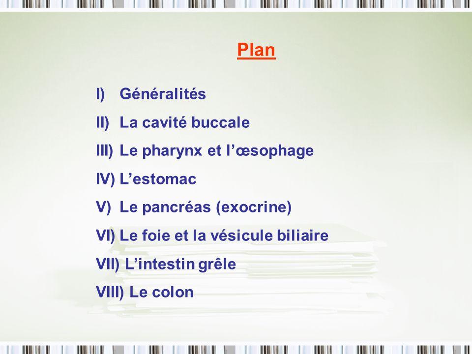 Plan I)Généralités II)La cavité buccale III)Le pharynx et lœsophage IV)Lestomac V)Le pancréas (exocrine) VI)Le foie et la vésicule biliaire VII) Linte