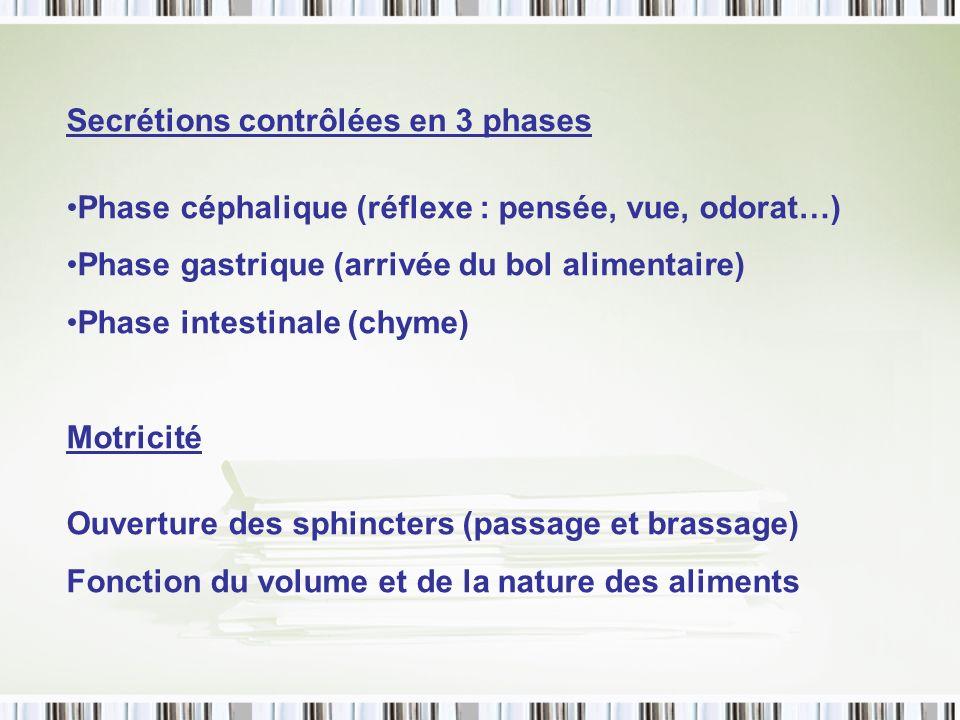 Secrétions contrôlées en 3 phases Phase céphalique (réflexe : pensée, vue, odorat…) Phase gastrique (arrivée du bol alimentaire) Phase intestinale (ch