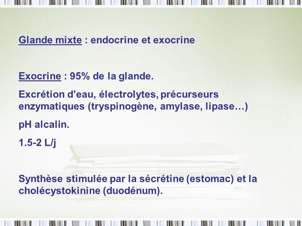 Glande mixte : endocrine et exocrine Exocrine : 95% de la glande. Excrétion deau, électrolytes, précurseurs enzymatiques (tryspinogène, amylase, lipas
