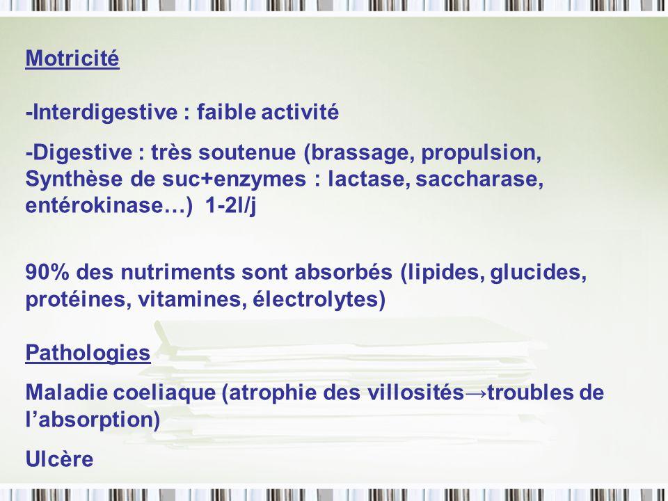 Motricité -Interdigestive : faible activité -Digestive : très soutenue (brassage, propulsion, Synthèse de suc+enzymes : lactase, saccharase, entérokin