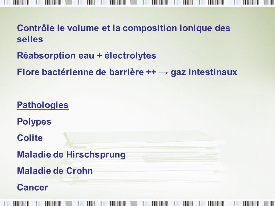 Contrôle le volume et la composition ionique des selles Réabsorption eau + électrolytes Flore bactérienne de barrière ++ gaz intestinaux Pathologies P