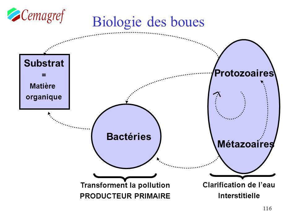 116 Biologie des boues Bactéries Substrat = Matière organique Protozoaires Métazoaires Transforment la pollution PRODUCTEUR PRIMAIRE Clarification de