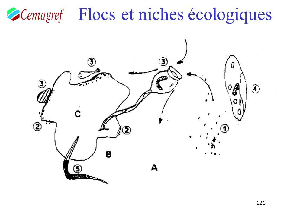 121 Flocs et niches écologiques