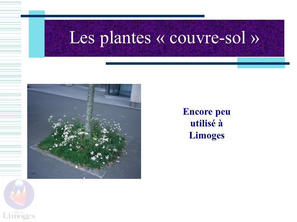 Les plantes « couvre-sol » Encore peu utilisé à Limoges