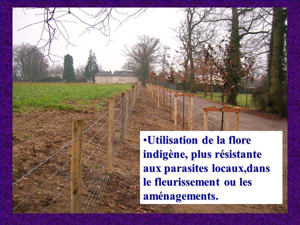 Utilisation de la flore indigène, plus résistante aux parasites locaux,dans le fleurissement ou les aménagements.Utilisation de la flore indigène, plu