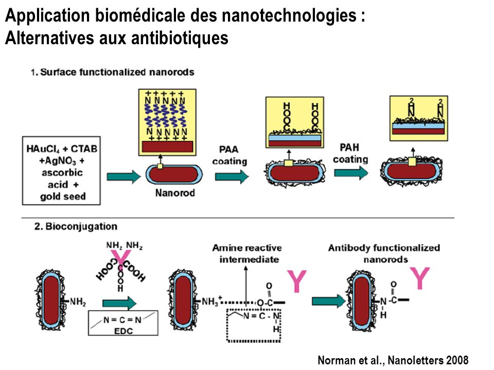 Application biomédicale des nanotechnologies : Alternatives aux antibiotiques Norman et al., Nanoletters 2008