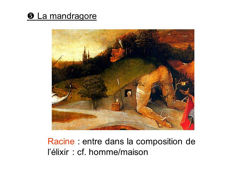 La mandragore Racine : entre dans la composition de lélixir : cf. homme/maison