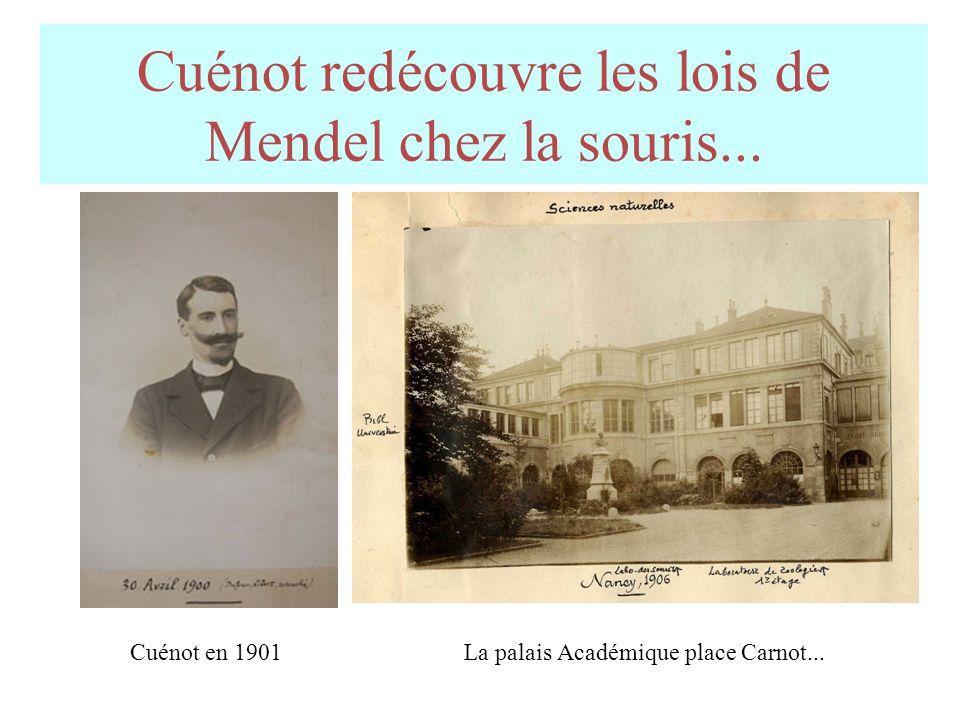 Cuénot redécouvre les lois de Mendel chez la souris...