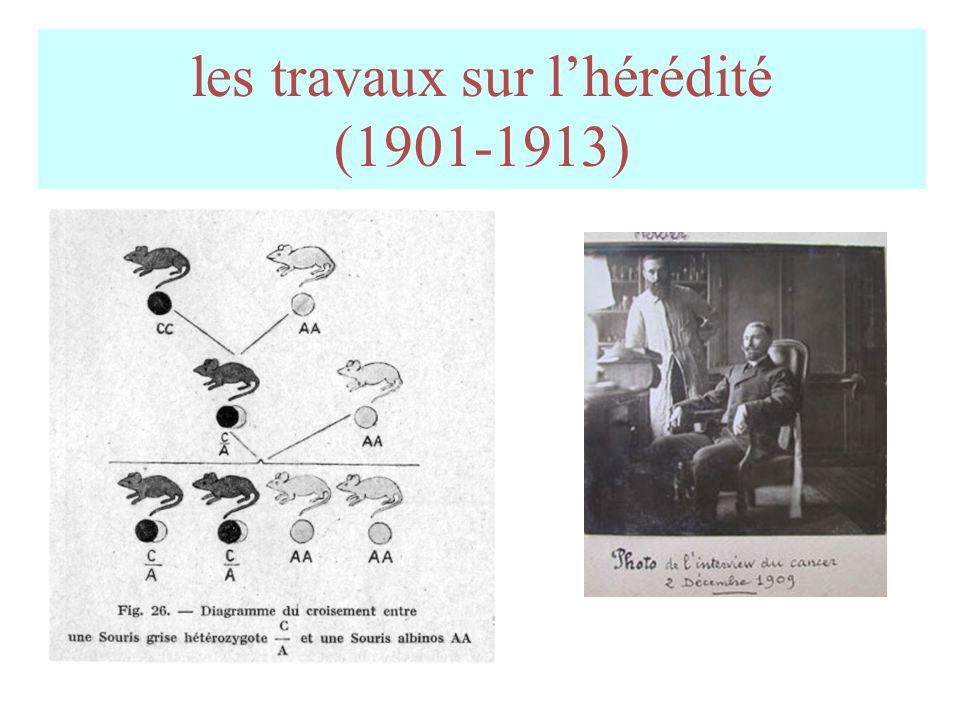 les travaux sur lhérédité (1901-1913)