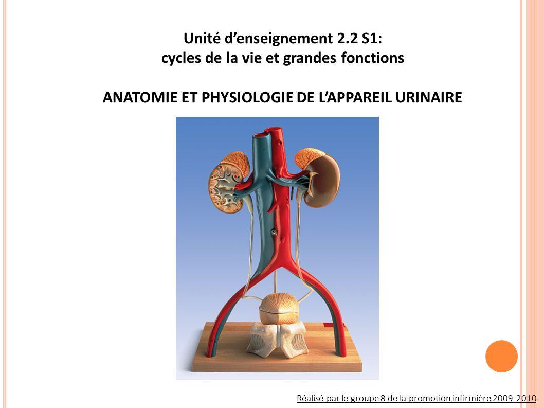 IV / La fonction Endocrine Du Rein