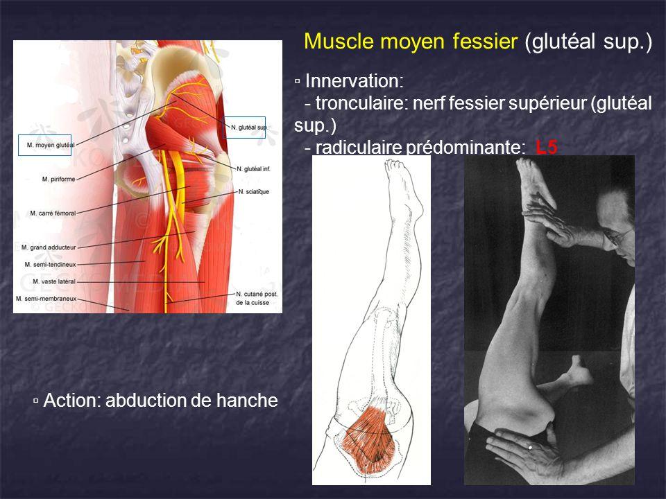 Muscle moyen fessier (glutéal sup.) Innervation: - tronculaire: nerf fessier supérieur (glutéal sup.) - radiculaire prédominante: L5 Action: abduction