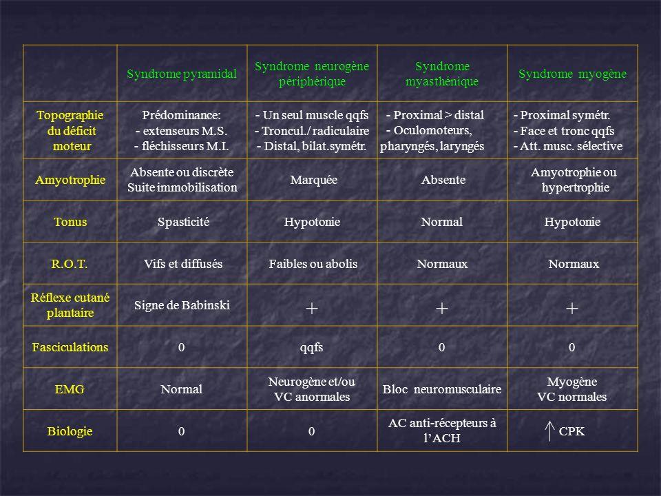 Syndrome pyramidal Syndrome neurogène périphérique Syndrome myasthénique Syndrome myogène Topographie du déficit moteur Prédominance: - extenseurs M.S