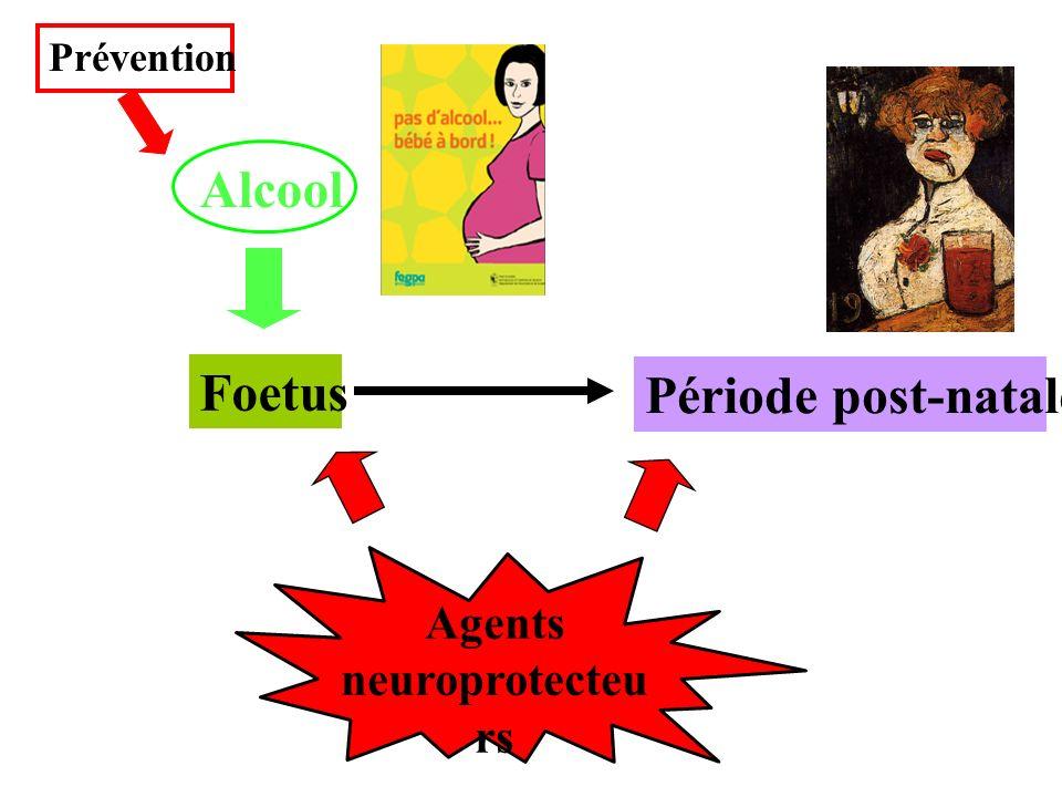 Foetus Agents neuroprotecteu rs Alcool Période post-natale Prévention