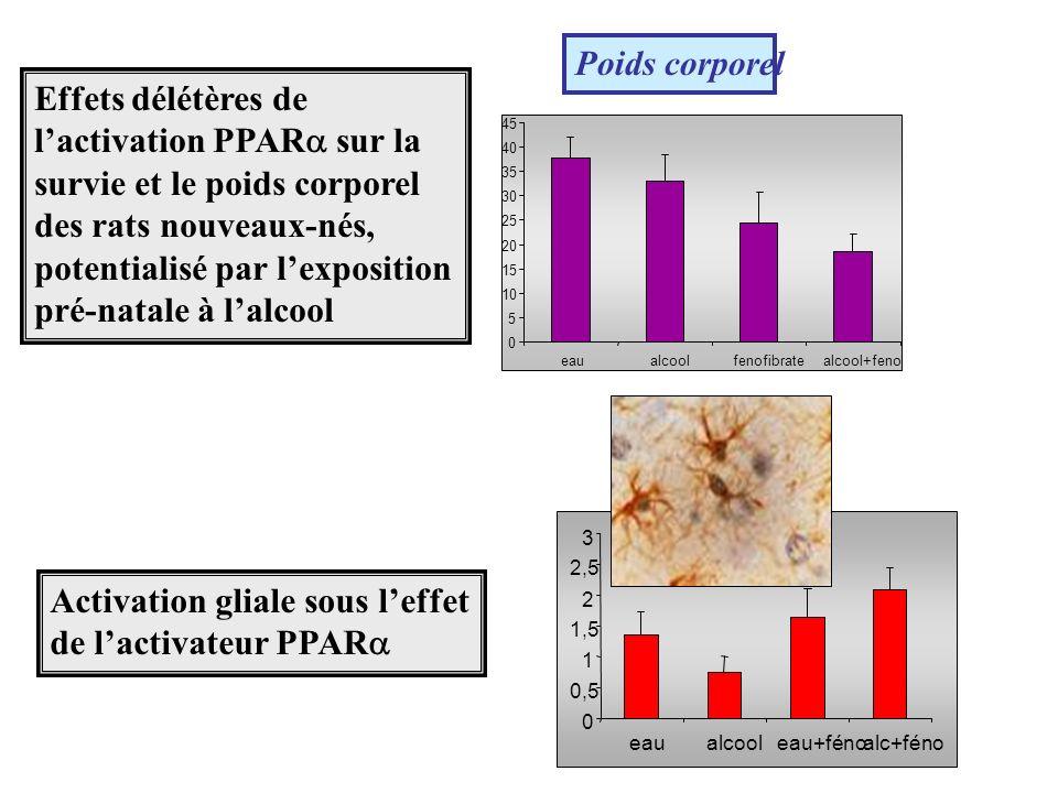 Poids corporel 0 5 10 15 20 25 30 35 40 45 eaualcoolfenofibratealcool+feno Effets délétères de lactivation PPAR sur la survie et le poids corporel des