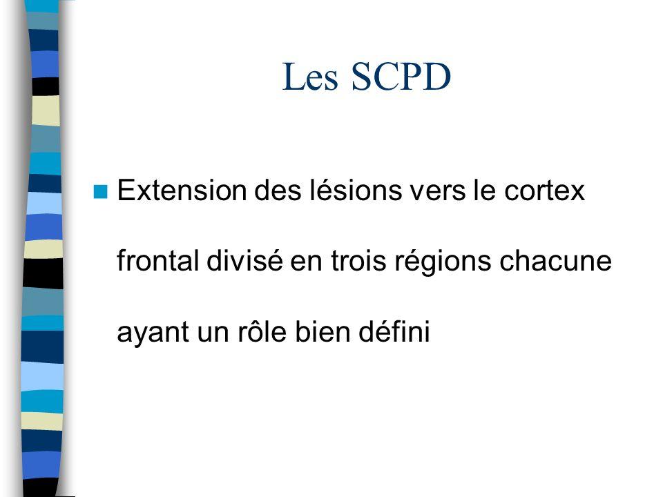 Les SCPD Extension des lésions vers le cortex frontal divisé en trois régions chacune ayant un rôle bien défini