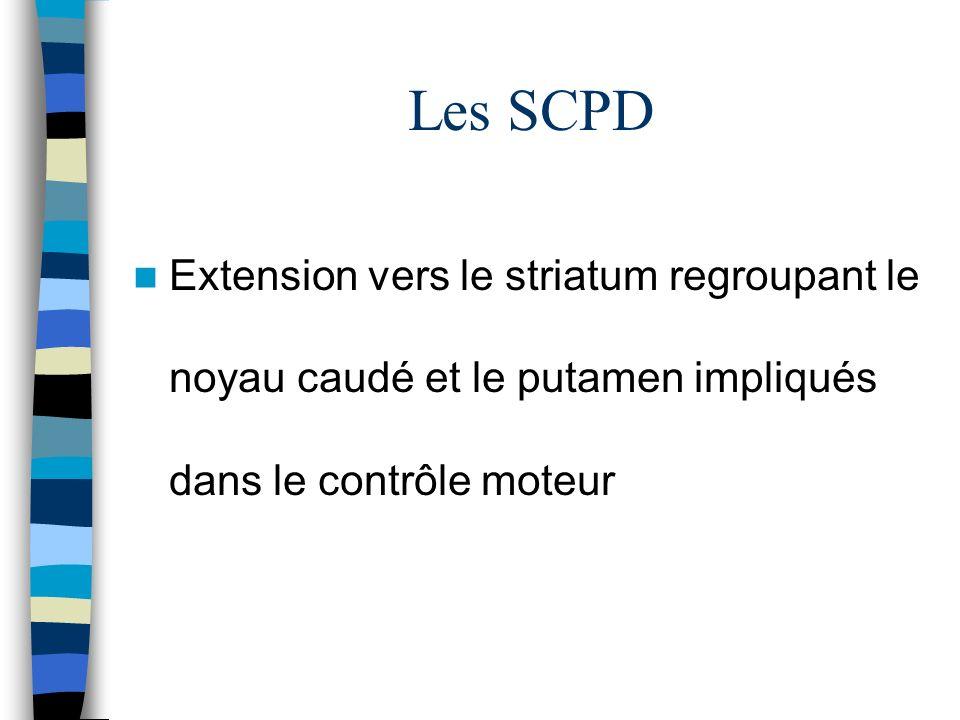 Les SCPD Extension vers le striatum regroupant le noyau caudé et le putamen impliqués dans le contrôle moteur