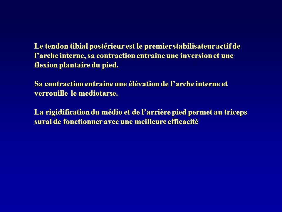 Le tendon tibial postérieur est le premier stabilisateur actif de larche interne, sa contraction entraine une inversion et une flexion plantaire du pi