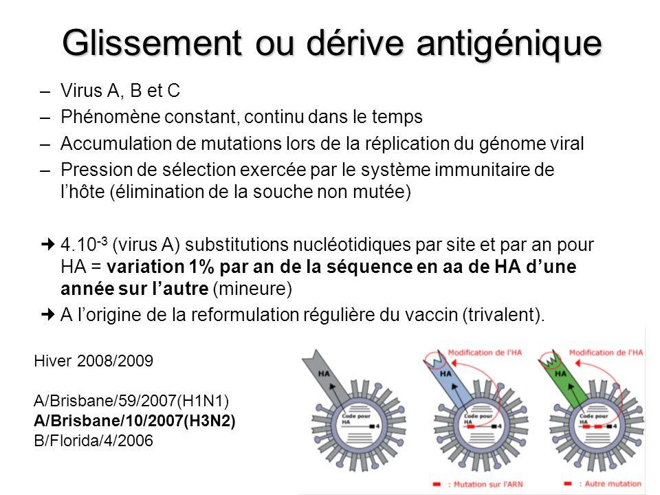 Cassure ou Saut antigénique (1) Uniquement Virus A Rare +++ Modification majeure de HA et/ou NA Réassortiment génétique possible du fait de la nature segmentée du génome Mécanisme : co-infection par un virus humain et un virus animal (volaille, porc) recombinaison in vivo émergence inopinée dun nouveau sous-type viral Population dénuée dAc, vaccin inefficace (nécessité dune reformulation rapide) Pandémie NB : intérêt de la double vaccination cette année, grippe saisonnière – grippe A(H1N1)v
