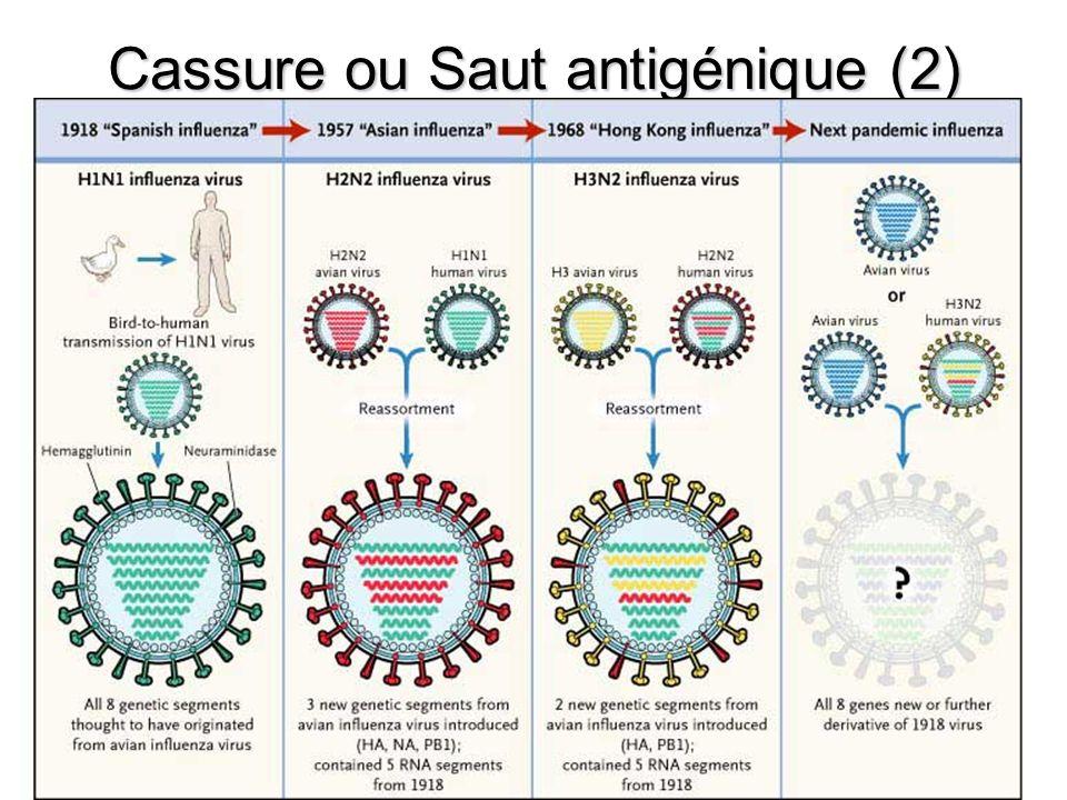 Origine du Virus influenza A H1N1 2009