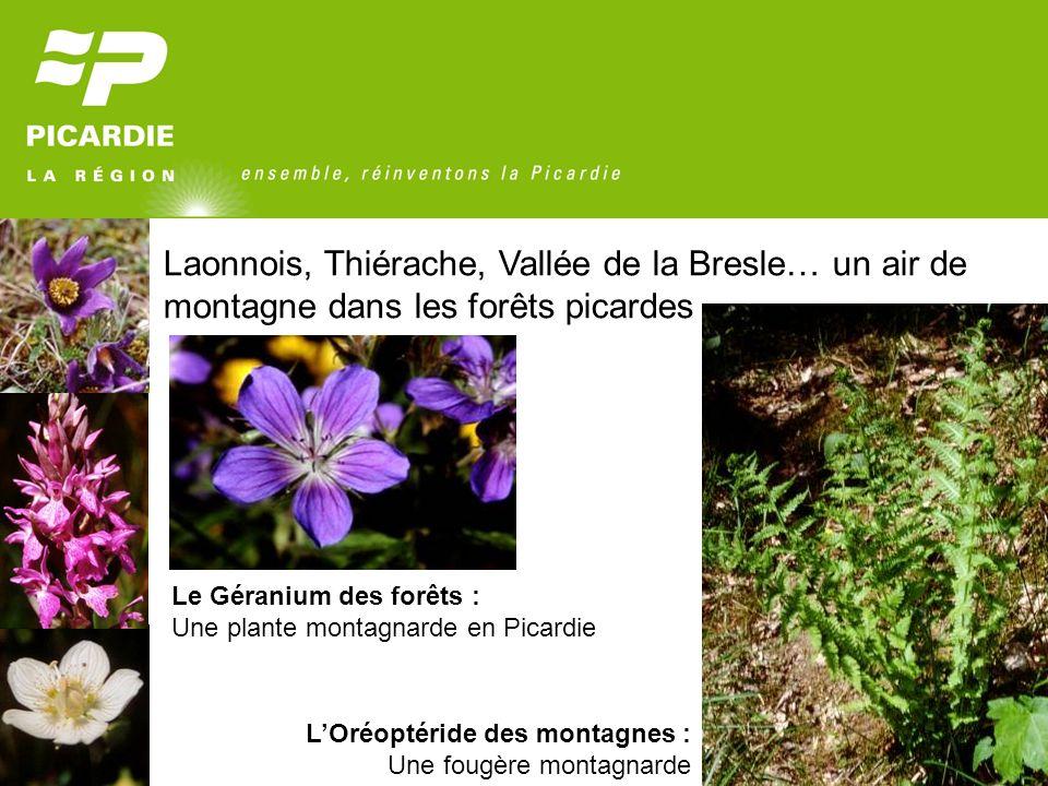 Laonnois, Thiérache, Vallée de la Bresle… un air de montagne dans les forêts picardes Le Géranium des forêts : Une plante montagnarde en Picardie LOré