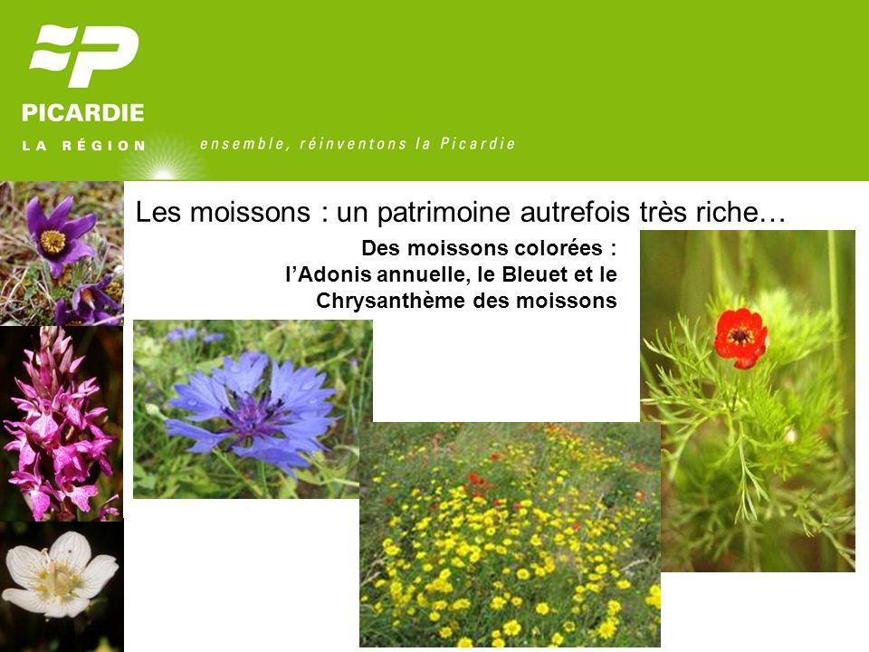 Un patrimoine commun qui sérode 228 plantes sauvages considérées comme disparues (en moyenne 2 par an depuis la fin du XIX ème siècle) 428 plantes menacées de disparition (environ 25% du total en Picardie)