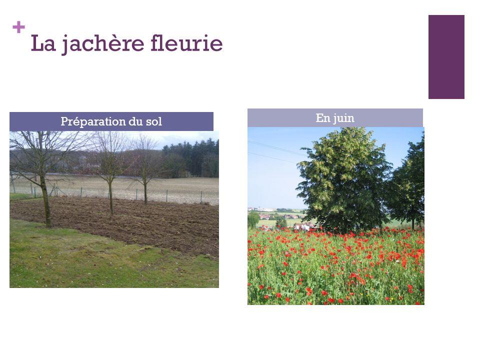 + La jachère fleurie Préparation du sol En juin