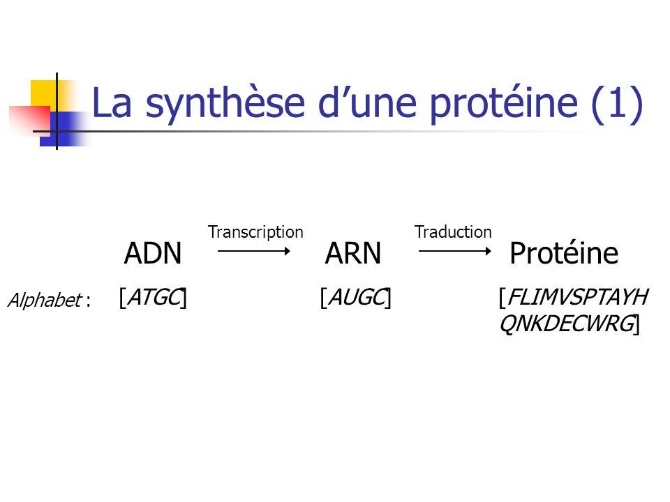 La synthèse dune protéine (1) ADN [ATGC] ARN [AUGC] Protéine [FLIMVSPTAYH QNKDECWRG] Alphabet : TranscriptionTraduction