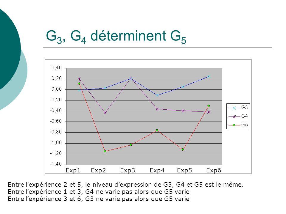 G 3, G 4 déterminent G 5 Exp1 Exp2 Exp3 Exp4 Exp5 Exp6 Entre lexpérience 2 et 5, le niveau dexpression de G3, G4 et G5 est le même. Entre lexpérience