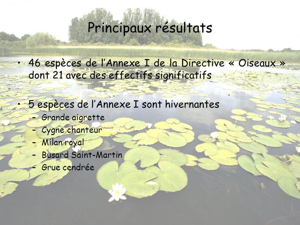 Principaux résultats 46 espèces de lAnnexe I de la Directive « Oiseaux » dont 21 avec des effectifs significatifs 5 espèces de lAnnexe I sont hivernan