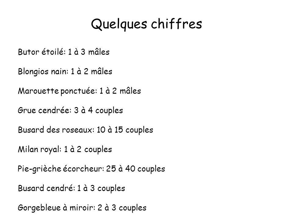 Quelques chiffres Butor étoilé: 1 à 3 mâles Blongios nain: 1 à 2 mâles Marouette ponctuée: 1 à 2 mâles Grue cendrée: 3 à 4 couples Busard des roseaux: