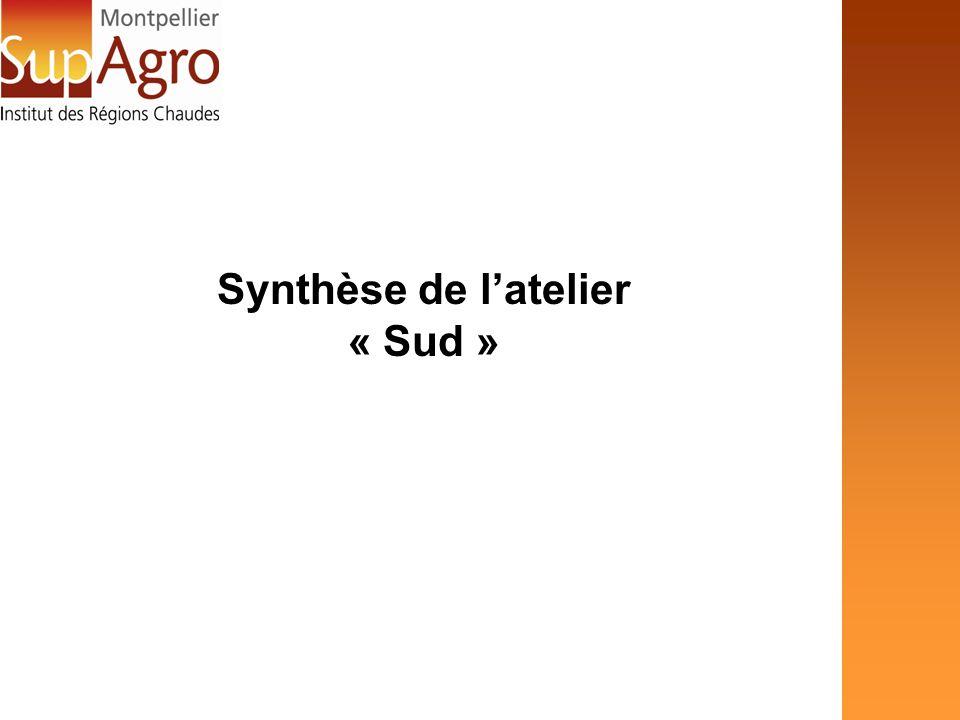 Synthèse de latelier « Sud »