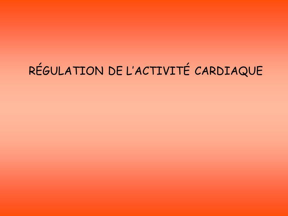 Muscle Cardiaque (fc et VS) Barocepteur CCM CCA RécepteurProcesseurs Nerfs sensitifs Hering et Cyon Nerfs moteurs Pneumogastriques Sympathiques cardiaques Ortho-s Para-s (n°X) Noradrénaline Acétylcholine EffecteurMédiateurs chimiques Variation de PA Régulation