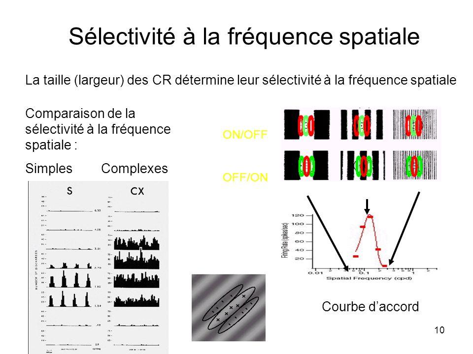 10 Sélectivité à la fréquence spatiale La taille (largeur) des CR détermine leur sélectivité à la fréquence spatiale Comparaison de la sélectivité à l