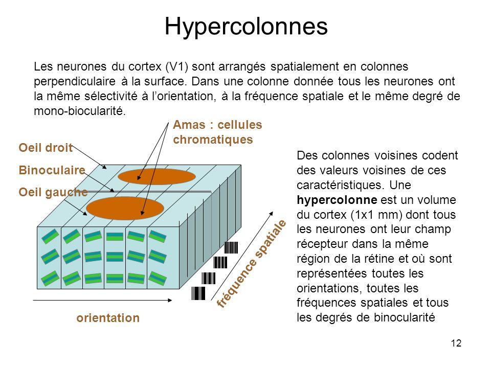 12 Hypercolonnes Les neurones du cortex (V1) sont arrangés spatialement en colonnes perpendiculaire à la surface. Dans une colonne donnée tous les neu