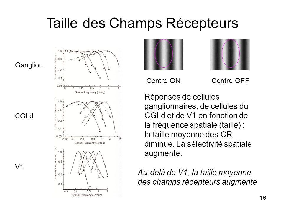16 Taille des Champs Récepteurs Centre ON Centre OFF Réponses de cellules ganglionnaires, de cellules du CGLd et de V1 en fonction de la fréquence spa