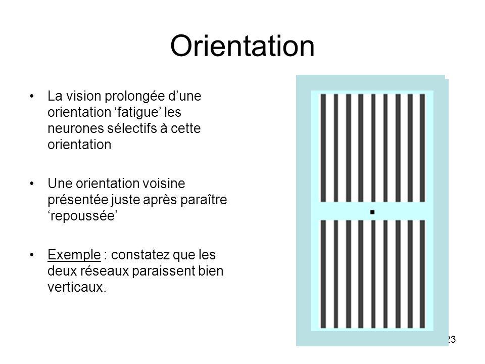 23 Orientation La vision prolongée dune orientation fatigue les neurones sélectifs à cette orientation Une orientation voisine présentée juste après p