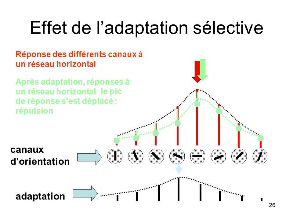 26 Effet de ladaptation sélective canaux dorientation Réponse des différents canaux à un réseau horizontal adaptation Après adaptation, réponses à un
