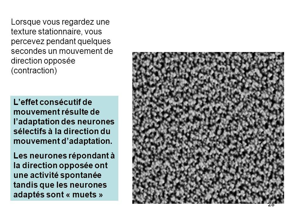 28 Leffet consécutif de mouvement résulte de ladaptation des neurones sélectifs à la direction du mouvement dadaptation. Les neurones répondant à la d