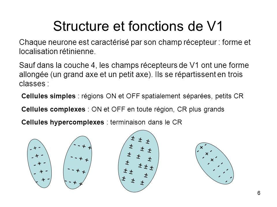 6 Structure et fonctions de V1 Chaque neurone est caractérisé par son champ récepteur : forme et localisation rétinienne. Sauf dans la couche 4, les c